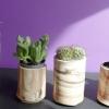pot à cactus - terre mêlées, février 2013 - diam. 7cm